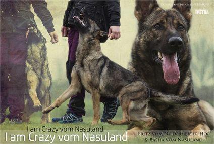 I am Crazy vom Nasuland