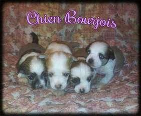 Helado De Le Chien Bourjois