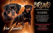 Bruno vom Hause Scherau