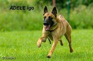 Adele Igo