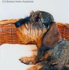 Boliwia Herbu Kopidolek