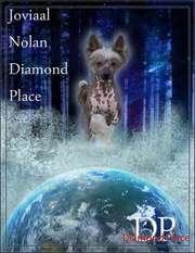 Joviaal Nolan Diamond Place