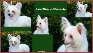 Snow White V't Lisserhoekje