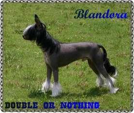 Blandora Double Or Nothing
