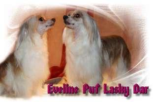 Eveline Puf Lasky Dar