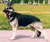 Almaz RKF R1457189 (Novozhilova)