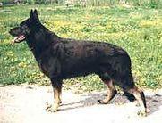 ROBIN GUD (Brovkina)