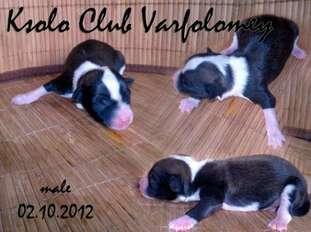 Ksolo Club Varfolomey