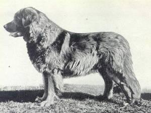 Carlo V. Glemstal