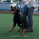 Bufalo Bill Delloronero Kennel