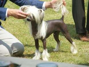 Flagstones Chinese Pony At Vanitonia