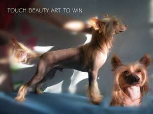 Touch Beauty Art To Win