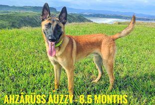 Ahzârüss Auzzy