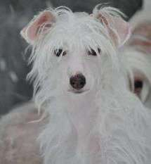 Dogtrix Keliga Knut