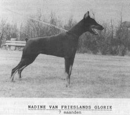 Nadine van Frieslands Glorie