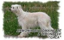 Armonia Du Domaine De L'hirondelle