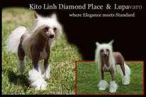 Kito Linh Diamond Place