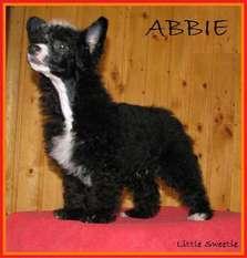 Abbie Little Sweetie