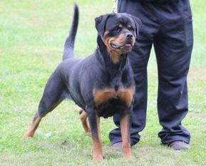 Morena of Kinder's Royal Rott