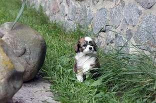 Elisey Del Azart Dog