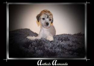 Anthed Armando