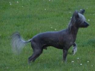 Renedream Running Bear