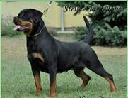 Stella Flash Rouse