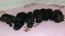 Puppies available