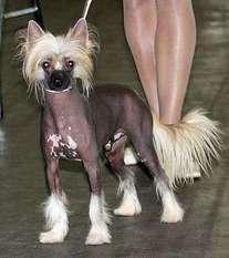 Be My Dog's Zippidee Doo Dah