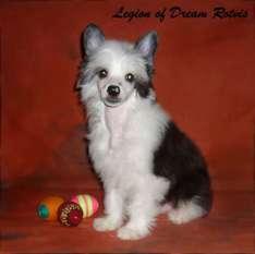 Legion Of Dream Rotvis