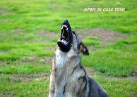 April di Casa Toso