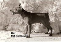 Noy me Beit Hamaayan