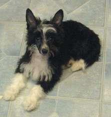 Princess Belle Doggie Leibow