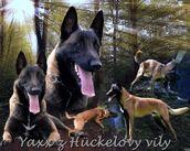 Yaxx z Hückelovy vily