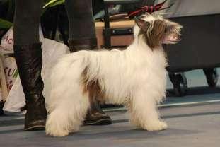 Little Dog Of Dream Happy Corsair