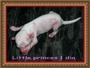 Little Princess De Almamasan