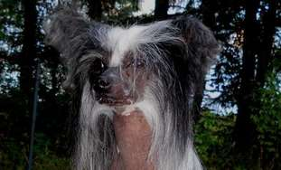 Aragorn Pony Dog