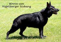 Winnie vom Vogelsberger Südhang