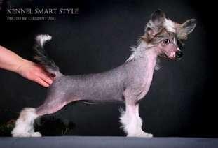 Smart Style Olarty
