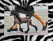 Woodcrest Always Bet On Black