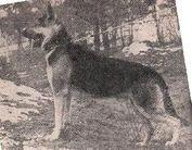 Ralf (Chekhmeystrenko)