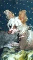 Ponyville's Waylon Gizmo