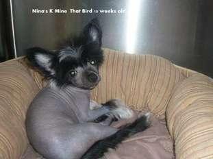 Nina's K Mine That Bird