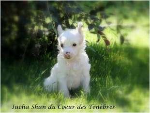 Iucha-shan Du Coeur Des Tenebres