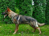 Galan Poli Dobrý psík