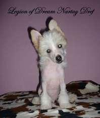 Legion Of Dream Nartay Dref