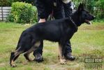 Bella vom Hundepit