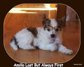 Suis Amillo Last But Always First