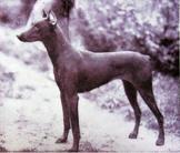 Freya von Burgund