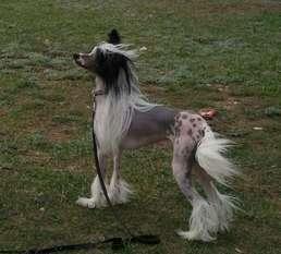 Elfgrace Forsen Rajan Dans